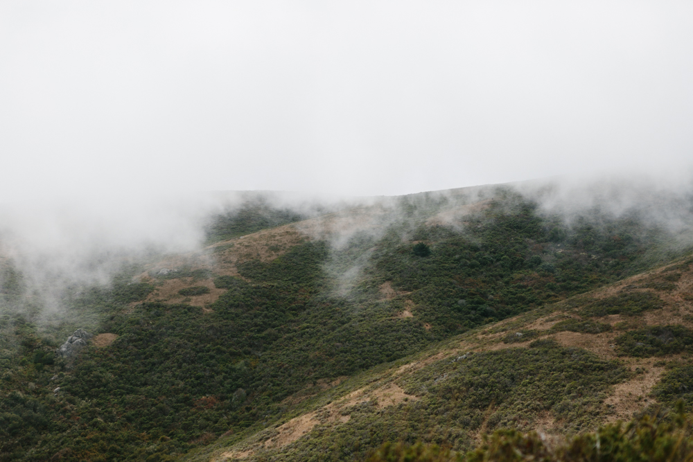 FogPoint_Hasselbrink_3J5A5338-2